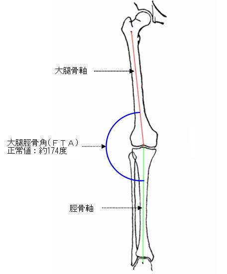 大腿脛骨角jpg